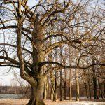 Park Dzikowski Tarnobrzeg zimą
