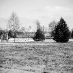 Park Dzikowski arboretum w Tarnobrzegu