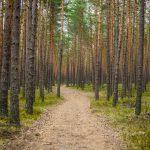 fotograf Dariusz Pająk - Roztoczeński Park Narodowy, szlak szumów (16)