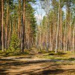 fotograf Dariusz Pająk - Roztoczeński Park Narodowy, szlak szumów (5)