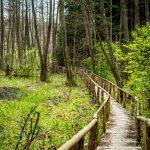 fotograf Dariusz Pająk - Roztoczeński Park Narodowy, szlak szumów (7)